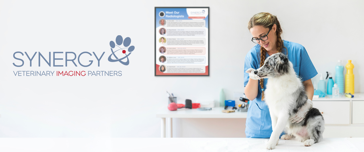 Synergy Veterinary Imaging Partners promotional marketing pieces designed by Andrew S. Kim